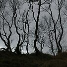 Birch Trees Growing on an Old Turf Dyke by cuilcreations