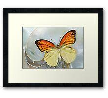 Butterfly_ Hebomoia leucippe Framed Print