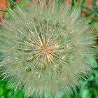 Dandelion Snow Ball by doublerainbow29