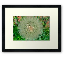 Dandelion Snow Ball Framed Print