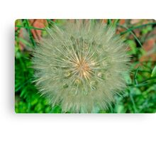 Dandelion Snow Ball Canvas Print