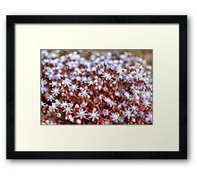 Magic Touch Framed Print