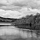 Combs Reservoir B&W by Aggpup