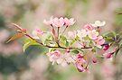Joyful Spring by KBritt
