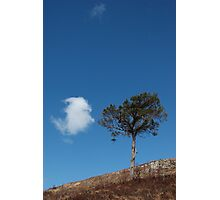 Lone Pine with Lone Cloud Photographic Print