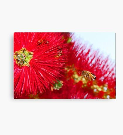 Bees And Bottle Brush Canvas Print