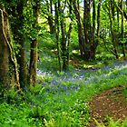 Bluebells Along The Coastal Path by Susie Peek