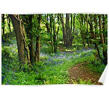 Bluebells Along The Coastal Path Poster
