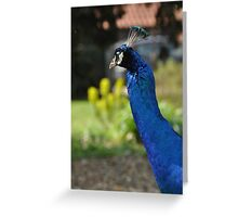 Long Neck Peacock Greeting Card