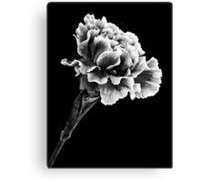 Carnation in Mono 1 Canvas Print