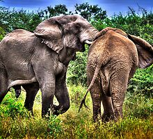 ELEPHANTS IN AFRICA by RonelBroderick