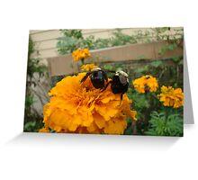 Let's Bee Buddies Greeting Card