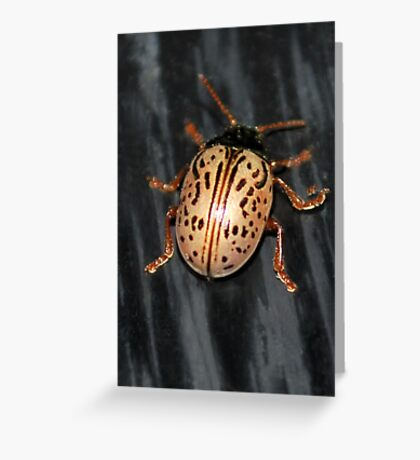 Willow Leaf Beetle Greeting Card