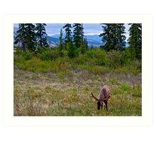 Elk in Jasper, Alberta Art Print