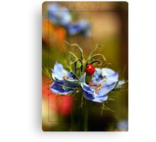 The Lady & Love in a Mist Canvas Print