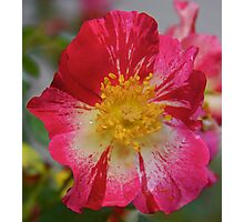 colorful flowers at grandmas house Photographic Print