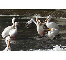 Pelican comedy club - with sceptics Photographic Print