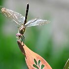 Grinning Dragonfly by Caren