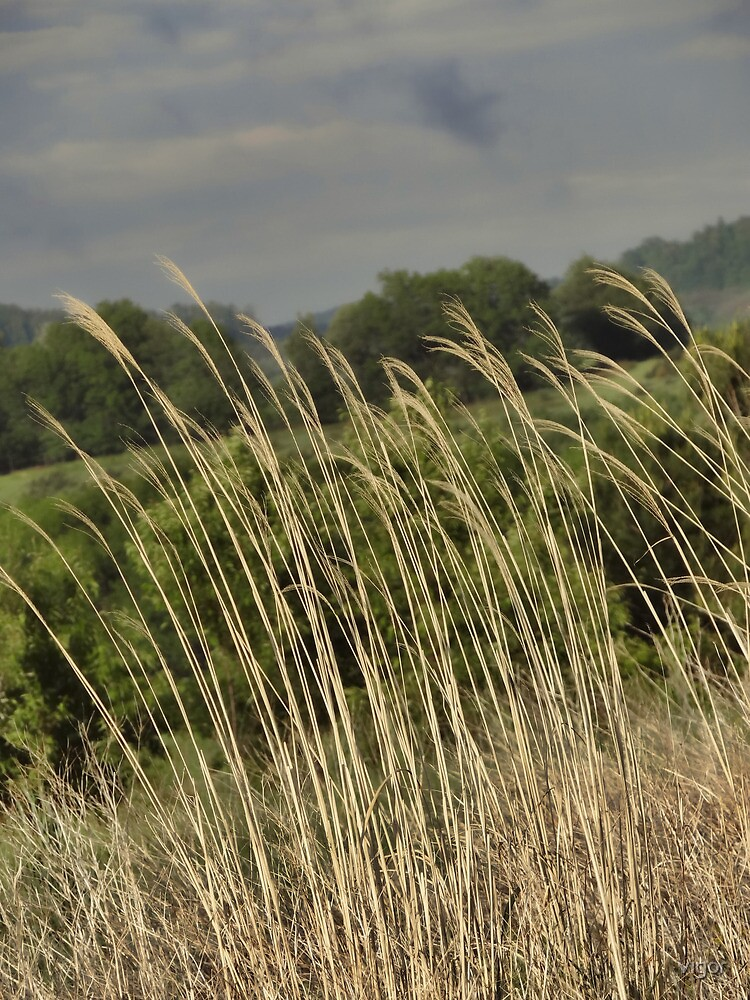 Tall Grasses by vigor