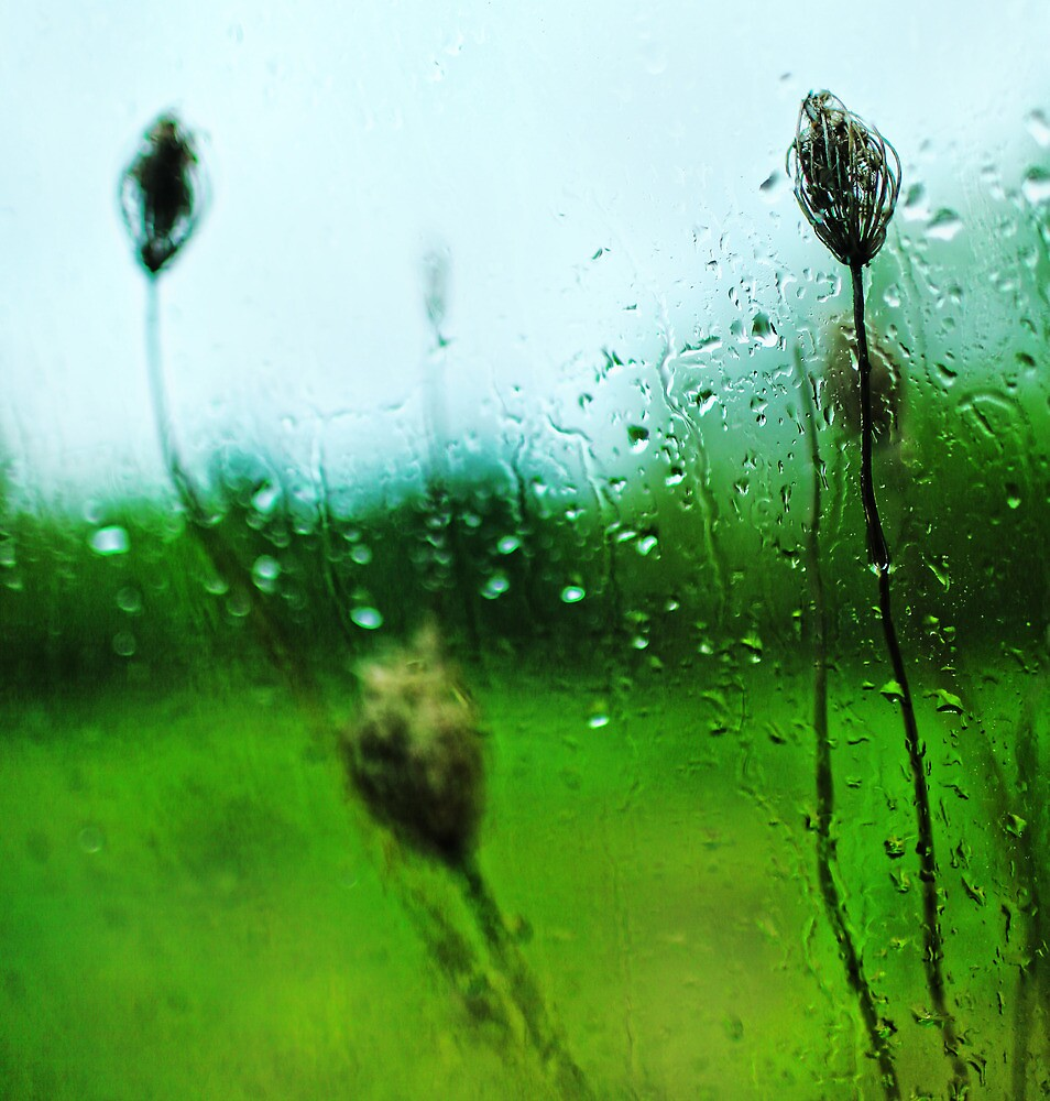 Plants Outside My Car Window on a Stormy Day by Nazareth