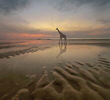 Giraffe by KLIMAS