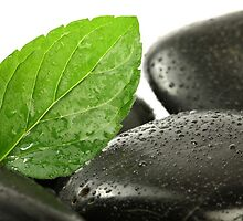 Mint Leaf with Lastones by ntd0277