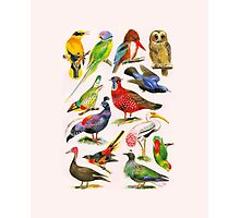 Birds of a feather Photographic Print