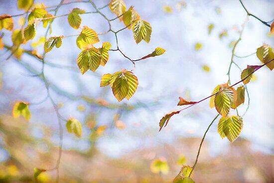 dancing leaves by Teresa Pople