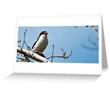 woodchat shrike Greeting Card
