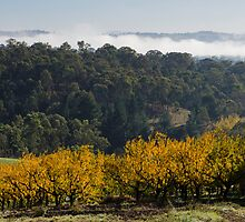 Aumann's Orchard, Warrandyte II by Adam Le Good