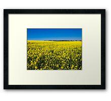 Rapeseed (Brassica Napus) Framed Print
