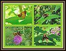 Zabulon Skipper Butterfly - Poanes zabulon by MotherNature