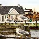 Gulls In Winter by SuddenJim