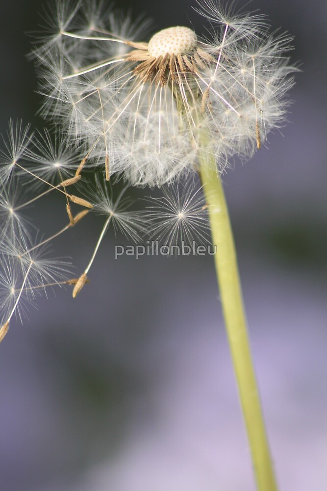 Wishes on the Wind! by Pamela Jayne Smith