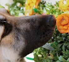 Sniff the Flowers by Keala