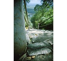Ant's Stare Down the Stairs - Lomo Photographic Print