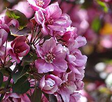 Pink Petal Power by vigor