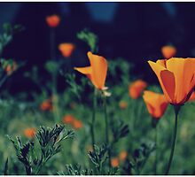 California Poppies by Jenn Ramirez