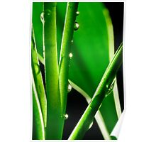 Exquizeet Bamboo Poster