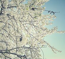 When Snow Blooms by RichCaspian