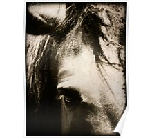 Tangled Forelock, Horse Photography Poster
