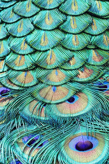 Shimmering Beauty by Irina Chuckowree