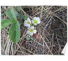 Wild flowers Winchester Lake Idaho Poster