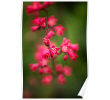 Red Coral Bells Poster