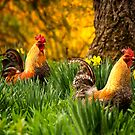 Two Roosters by KellyHeaton