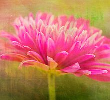 Painted Pink Chrysanthemum by daphsam