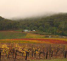 Misty Bright Autumn Vineyard by Pauline Tims