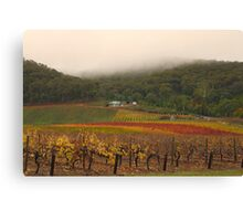 Misty Bright Autumn Vineyard Canvas Print