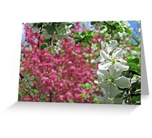 May Blossoms Greeting Card