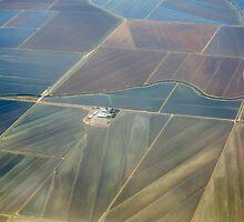 Natomas Rice Fields by Diego  Re